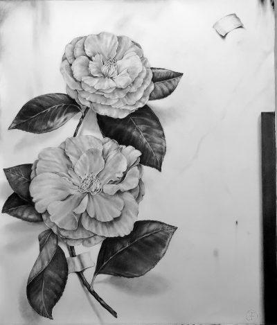 Two Camellias